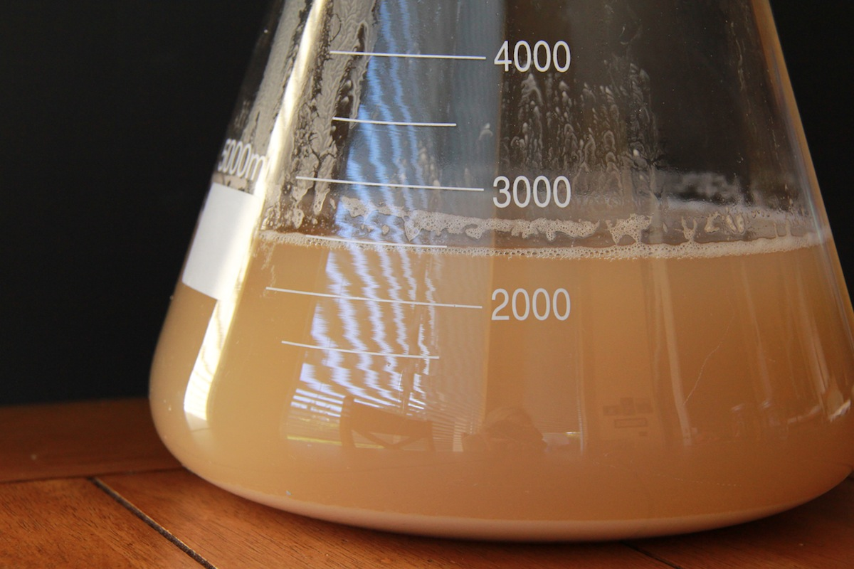 Homebrew Technique: Making A Yeast Starter